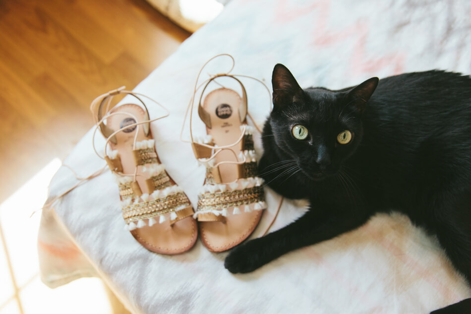 fotografia bodas gato y zapatos